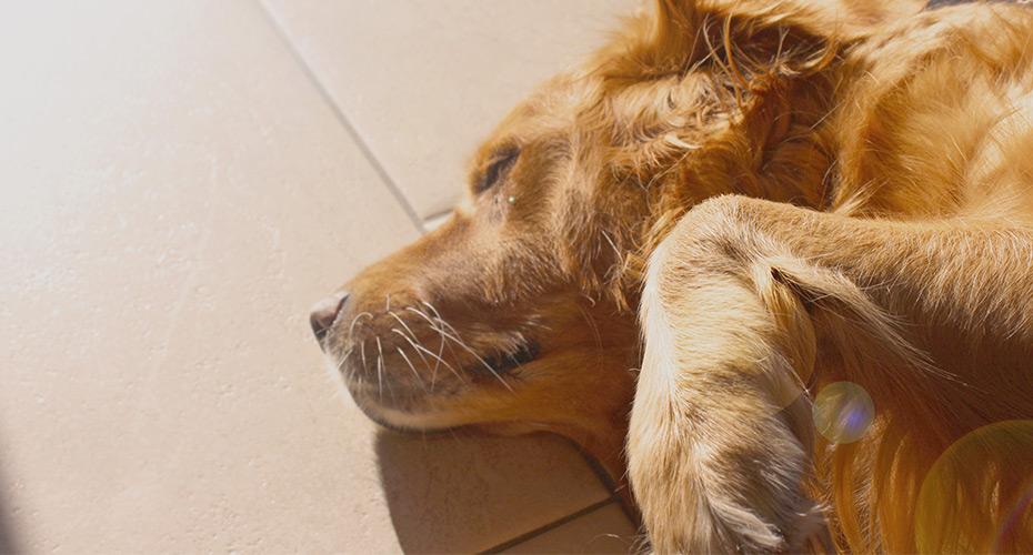 Online Pet Pharmacy - PetScripts.com.au
